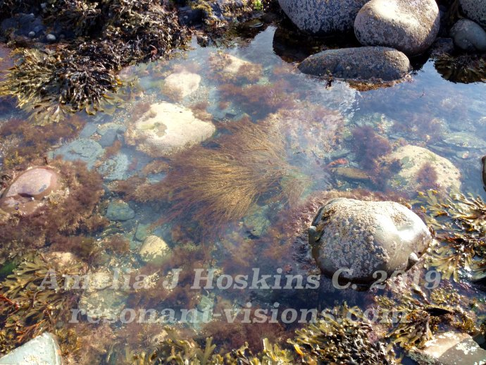 Seaweed floats as tide comes in