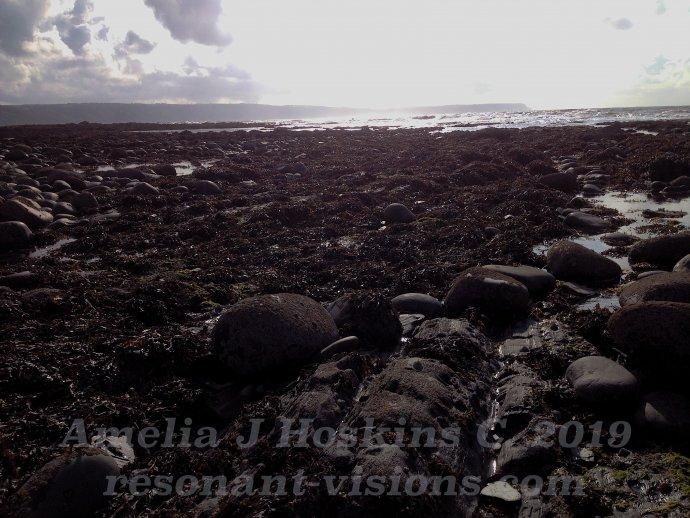 Rocks brown seaweed