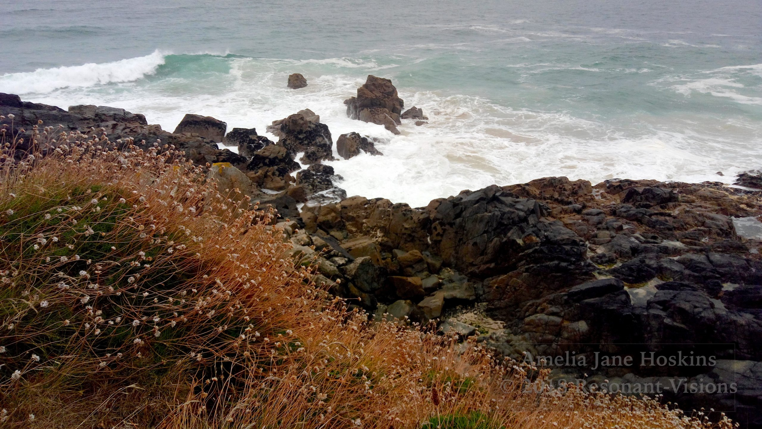Transition from thrift path over dry rocks to brown tidal rocks and waves breaking